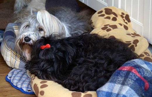 Milka und Kar-mi beim Kuscheln