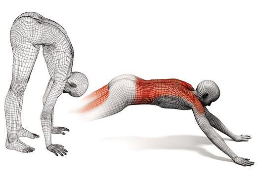 CAMMINATA CON LE MANI (Per spalle, nuclei musc. e musc. posteriori coscia) Piegarsi in avanti fino a toccare terra con i palmi delle mani. Avanzare con le mani fino alla quasi totale estensione schiena, sempre gambe tese portarle verso le mani 5/6 volte