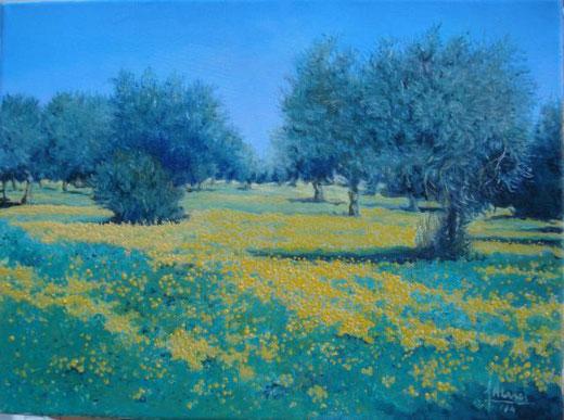 Alesci Francesco – Ulivi a primavera - olio tela - 40 X 30