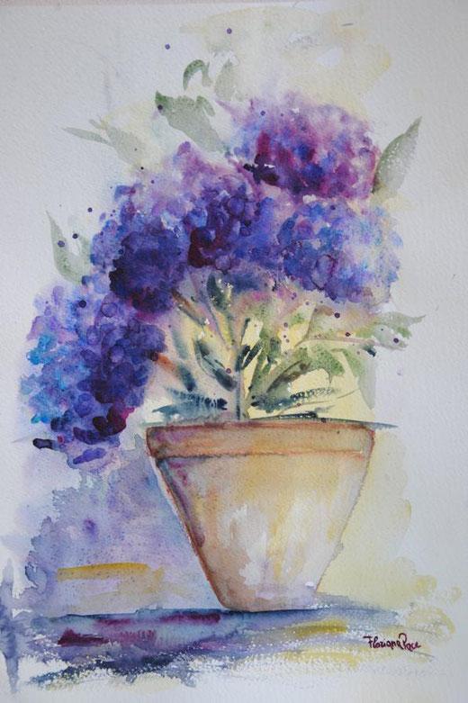 Floriana Pace - Ortensie in vaso - acquerello su carta - 35 x 50