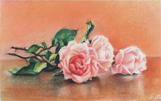 Gianfranco Castelli - Rose - matita su carta - 30 x 20