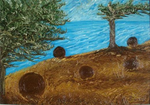 Testoni Patrizia - Volo di gabbiano celato - olio tela - 50 X 35
