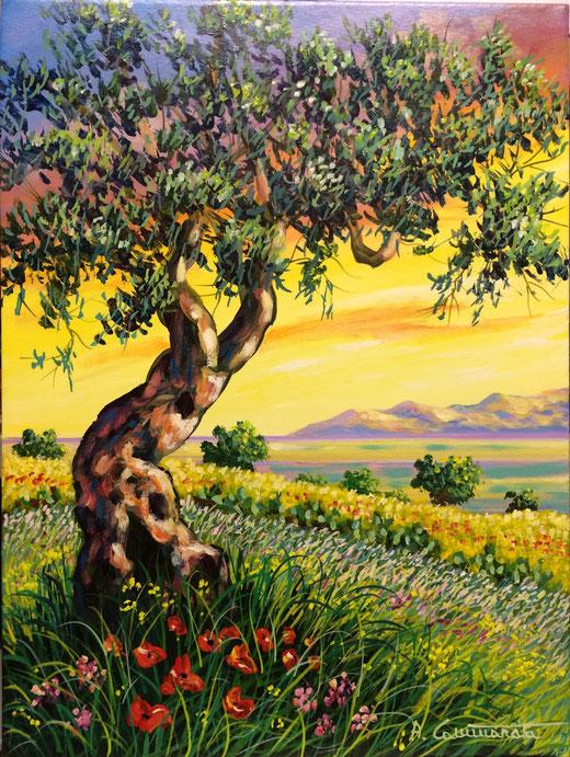 Cammarata Antonino (Italia) - Vecchio ulivo - olio tela - 30 x 40