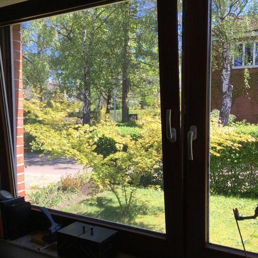 """""""Der Blick auf den japanischen Ahorn, den wir im März 2014 gepflanzt haben, als Papa starb. Er spielt so schön im Wind."""" Katrin, Kellinghusen, Schleswig-Holstein"""