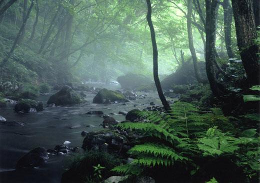 悠久の森で 大和町升沢小荒沢 佐々木康照