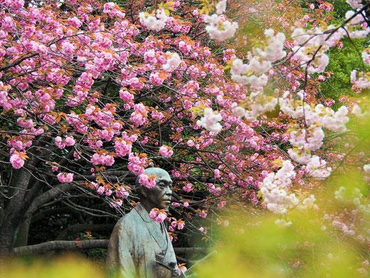 コロナに驚いた(林子平)像です。県庁市役所前バス停で撮影  佐々木 かよ