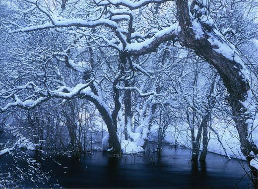 厳冬に逞しく  佐々木康照