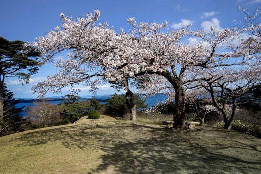 松島 はるうらら西行も見た桜かな  高瀬 英雄