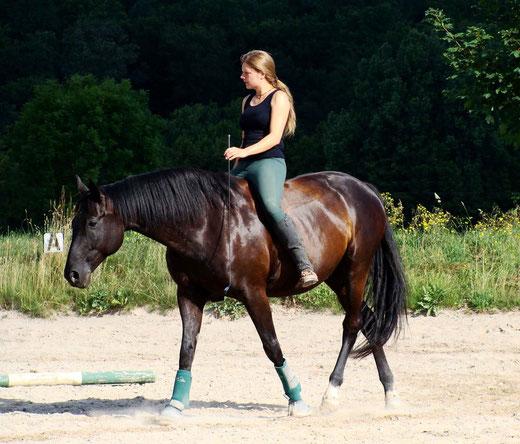 Ein Ziel in der Ausbildung ist das Vertrauen zwischen Pferd und Reiter
