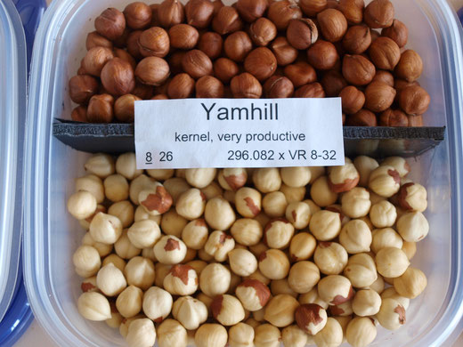 Yamhill nuts before and after blanching