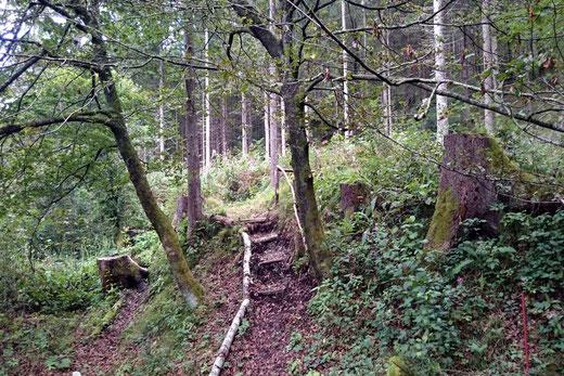gleich am Anfang ist eine kurze gesicherte Geländestufe zu überwinden