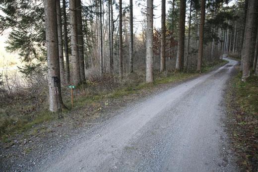 im Bild links beim Baum der Hinweispfeil (Steiganfang)
