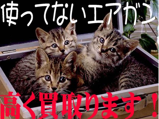 札幌エアガン買取猫