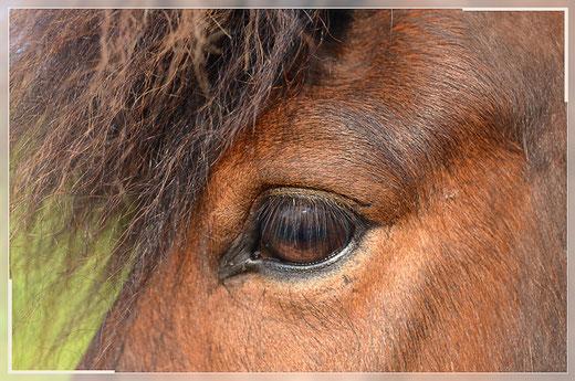 Pferdefreunde Alter Pfarrhof Cospeda