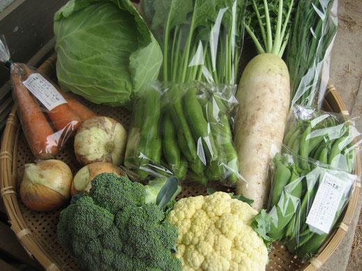 6月の野菜セット