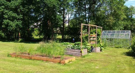Hochbeet mit grünem Spargel im Juni und weitere Hochbeete mit Rankgerüst für Weinreben im Hintergrund.