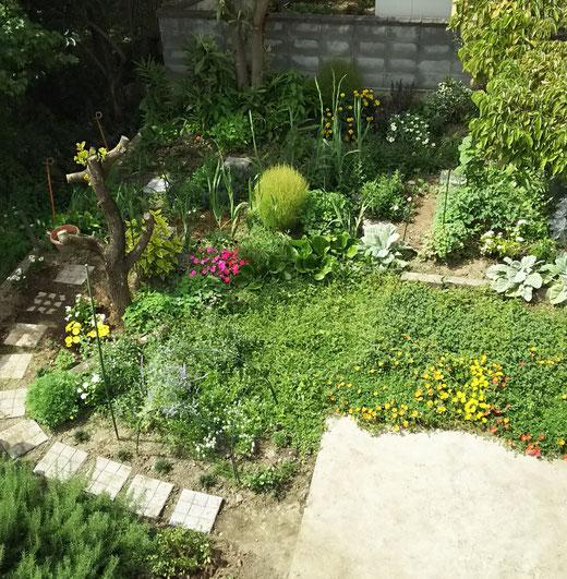 我が家の今年から作り始めた庭に、毎日、色々なちょうちょうが遊びにきてくれます。季節に合わせたお花が咲くように造り上げていく予定です