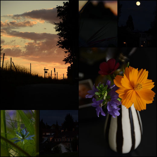 AincaArt, Ainca Gautschi-Moser, Foto und Text, writer photographer, www.aincaart.ch, Quersatz, Sunset, Sonnenuntergang, Jungfer im Grün, Collage