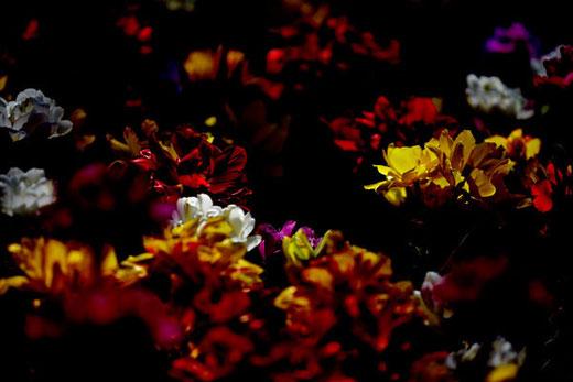 darkness_03