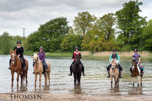 Picasso, Akim, Merlin, Ibo und Sandy am Lanker See
