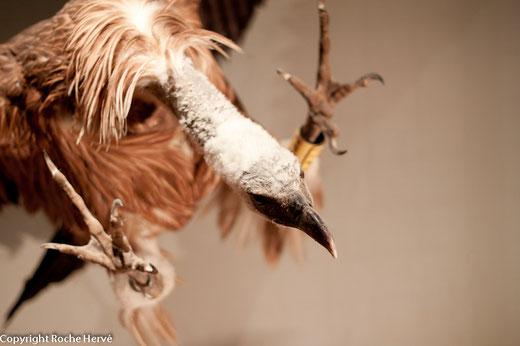 La maison des vautours - Gorges de la Jonte