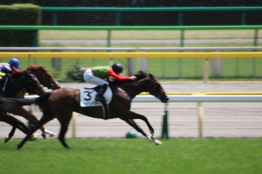 東京競馬場 競馬 レース 勝ち馬