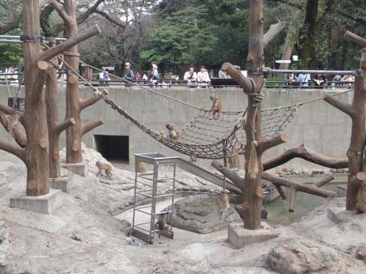 井の頭自然文化園 さる山