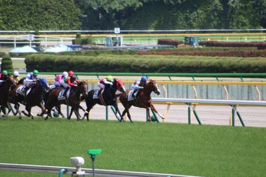 東京競馬場 最後の直線 坂道