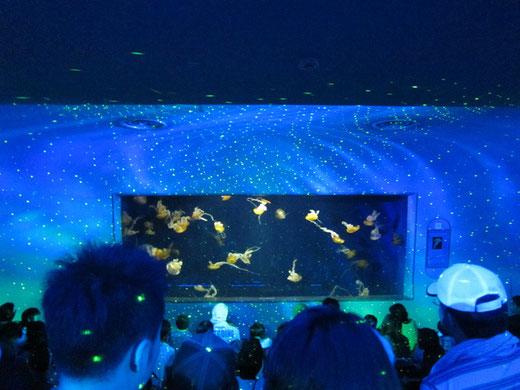 新江ノ島水族館 スターライトクラゲショー「海月の宇宙(そら)」