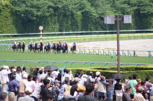 東京競馬場 第4コーナー