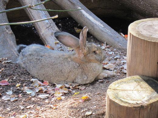上野動物園のうさぎ