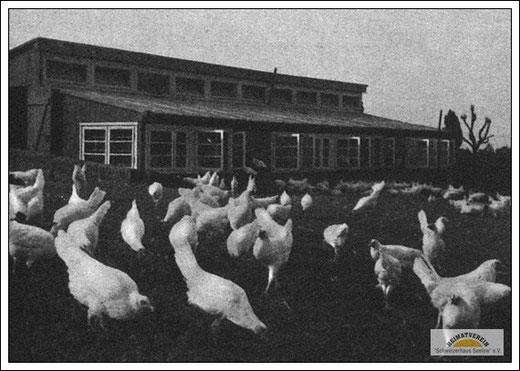 Geflügelfarm