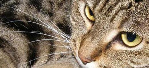 Mit Tieren sprechen - Dekofoto Erfahrungsberichte