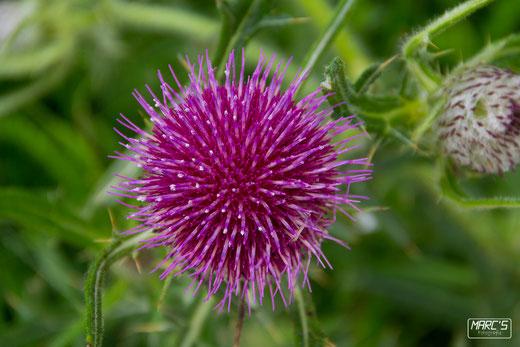 Auch ne Wilde Blume