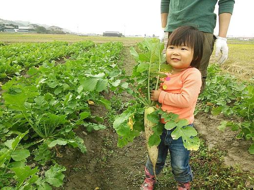 2家族が、ニンジンの間引きの手伝いに来てくれて、大変助かりました。(お土産にダイコンの収穫)