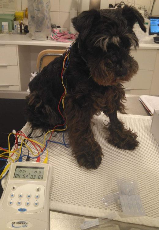 Consulta veterinaria y acupuntura