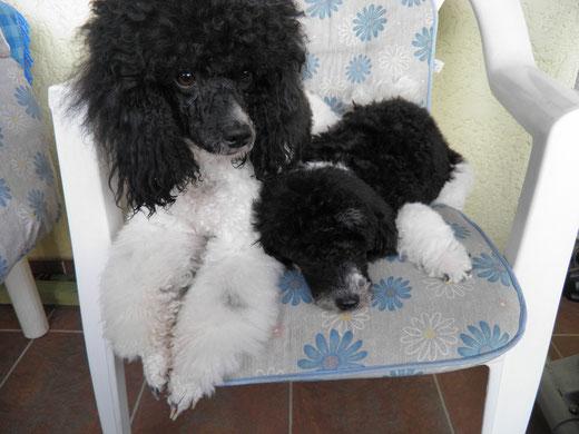 Duffi und Amanda (15 W)