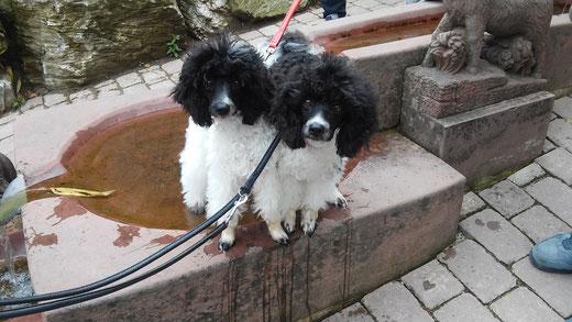 Abi und Natschi beim Kneipptreten im Taunus ;-)