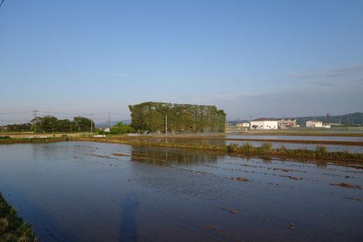 出雲 斐川平野の築地松のある風景