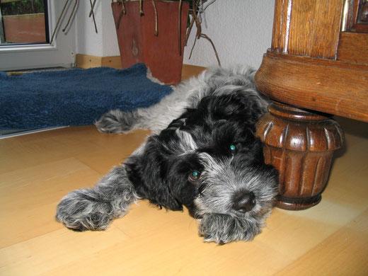 Lilli vor neun Jahren