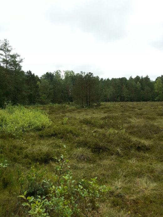 Übergang zum Niedermoor