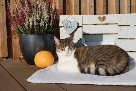 Katze Kasi genießt die wärmende Decke