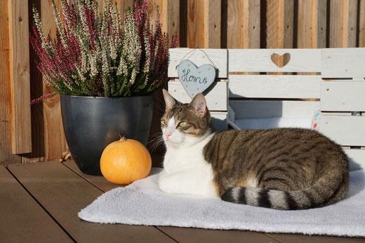 Katzenmädchen Kasi auf der Wärmedecke