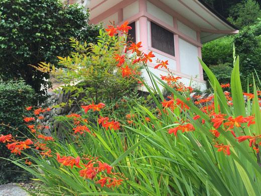 大念寺の花