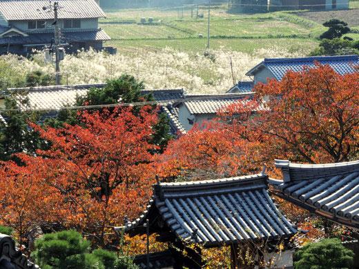 茨木大念寺
