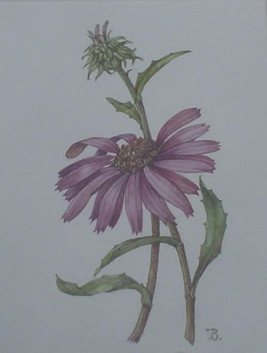 Han van den Broeke Veere, Schilderij bloemen te koop.
