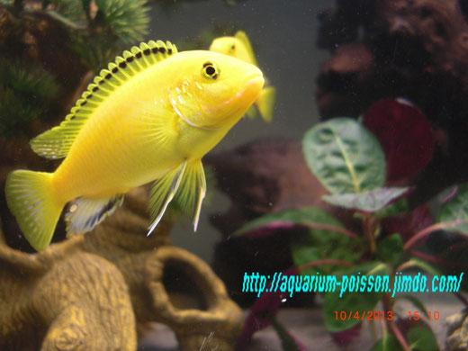 photos aquarium site de poisson tropicaux d eau douce