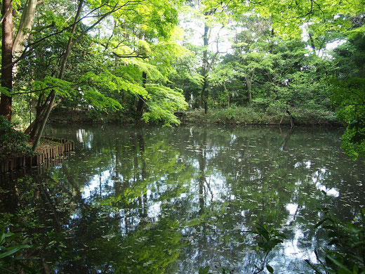 ●滄浪泉園の池です。若葉の緑が池に映って美しかったです。ここは、どこかの深山に迷い込んだ気分になる不思議スポット。幽玄な水琴窟の音色も楽しめます。