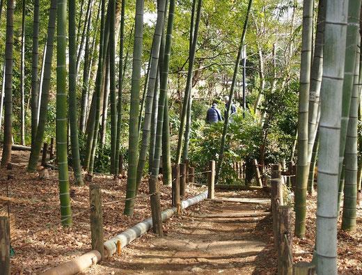2月5日(2015) モウソウチクの道:(武者小路)実篤公園にて2月4日に撮影