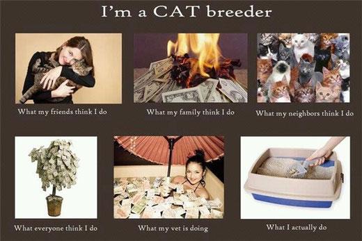 заводчик кошек